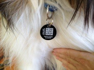 custom qr codes make owning a pet safer